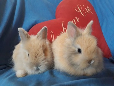 króliki karzełki miniaturki wyprawka transport