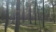 Sprzedam działkę leśną - LAS SOSNOWY 1.05hA!!!