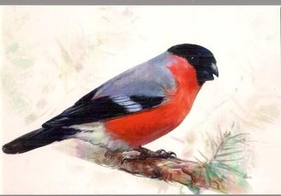 Pocztówka Gil Ptak Rosja 6898367243 Oficjalne Archiwum Allegro