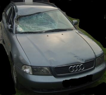 Audi A4 B5 Kombi Po Kolizji Z łosiem 6823187742 Oficjalne