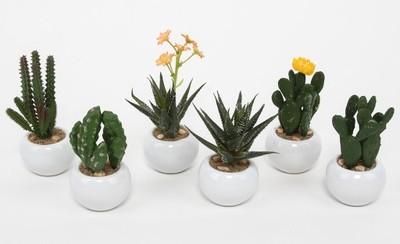 Różne Sukulenty Ceramiczna Doniczka Kwiaty Kaktusy