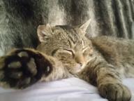 Weterna- kot z fiv, walczy o życie, pomoc