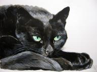 Portret kota, psa, ze zdjęcia, kot, pies, koń