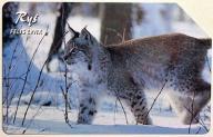 ! ! 1335 Zwierzęta chronione - Ryś