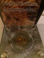 World of Evolution Ammonoidea Burkina Faso 2016.
