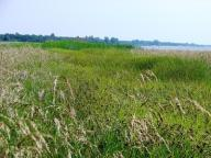 Koszenie trawy, wykaszanie działek rowów, f-ry Vat