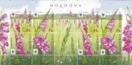 Mołdawia 2016 - Kwiaty - Gladiolus - Mieczyki - ar