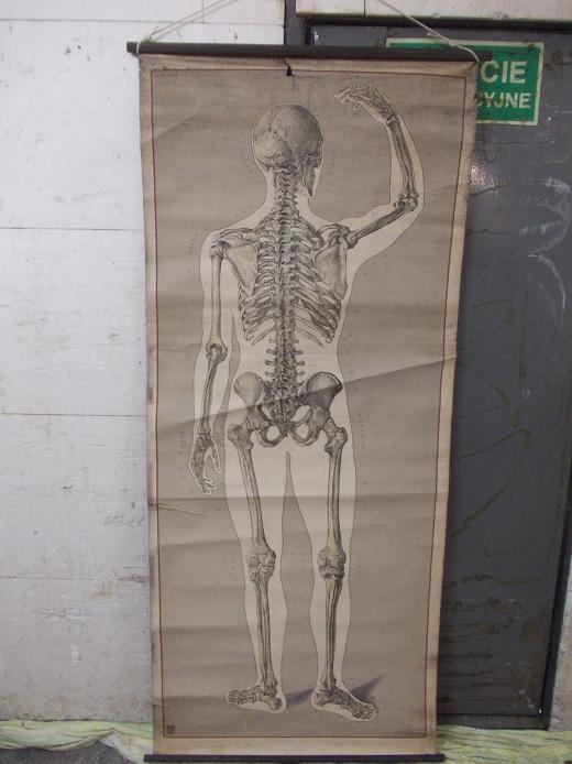 Stara Mapa Anatomiczna Człowieka Szkielet Tył 7075041302