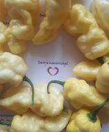 Bhut Jolokia White nasiona papryka Indyjskie Chili