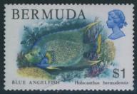 Bermuda 1s - Holacanthus bermudensis