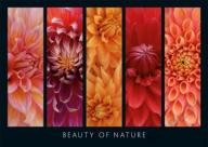 RAVENSBURGER PUZZLE 1000 BEAUTY OF NATURE  W-wa