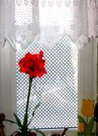 > Folia okienna matowa dekoracyjna Lambert 015
