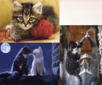pocztówki KOTY artystyczne 3 szt