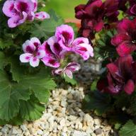 Zeolit do pielęgnacji kwiatów 2 kg