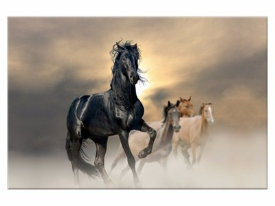 Obraz Koń 120x80 Obrazy Konie Na Prezent 2491 6533725144
