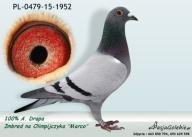 Gołębie pocztowe - Okazja.