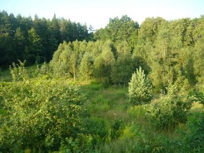 Działka Warmia i Mazury - Miłakowo 30 arów