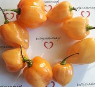 Habanero Peach chili chilli nasiona papryka!
