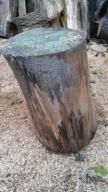 Drewno lipowe, lipa do rzeźbienia, klocek nr 6