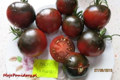 Pomidor Blue Chocolate Od Mojepomidory 5902110644 Oficjalne
