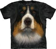 Bernese Mountain Dog - Berneński Pies Pasters @ L