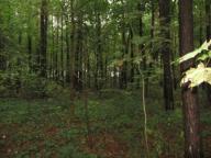 Las obok Seroczyna
