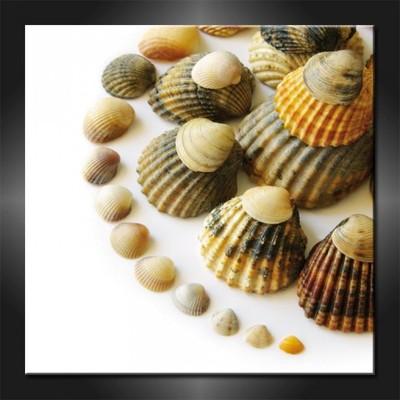 Obrazy Canvas 70x70 Muszle Muszelki Do łazienki 5414911515
