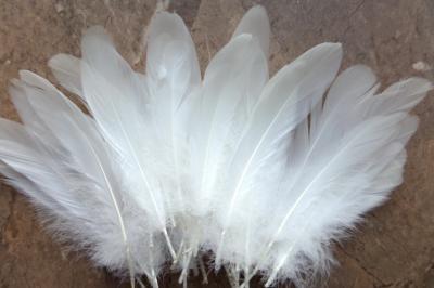 Pióra Białe Piórka Ozdobne Gęsie Duże Długie 20cm