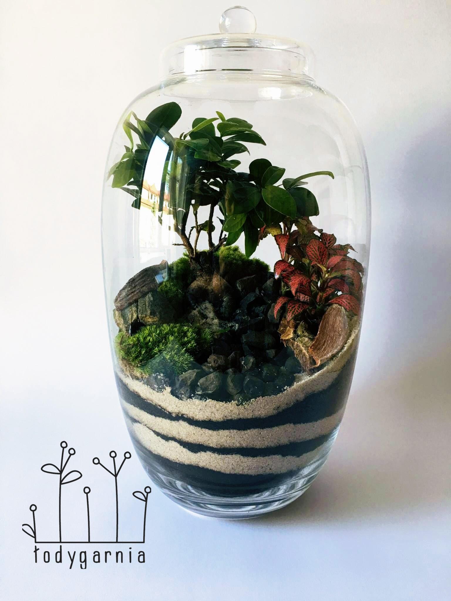 Ogród W Szkle Las W Szkle Ficus Bonsai Prezent 7008274125