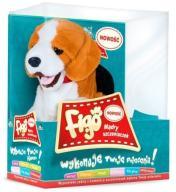 Madej Piesek reagujący na komendy Beagle