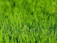 regeneracja trawnik , wertykulator