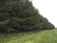 Działka rolna leśna 3,43 ha las sosnowy Wielboki