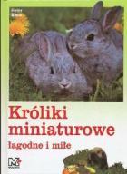 Króliki miniaturowe łagodne i miłe - Beck -NOWA