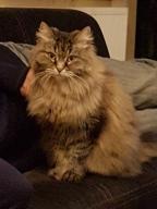 Puchata kotka Nina szuka swojego spokojnego domku