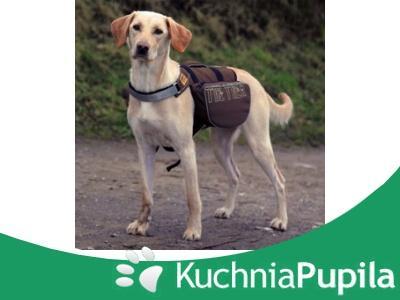 Trixie Backpack For Dogs Plecak Dla Psa 28831 4140974287