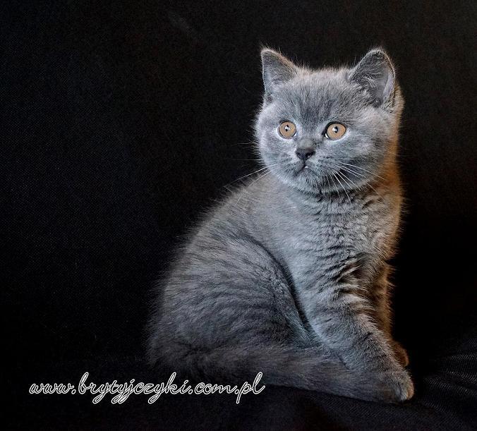 Kot Kot W Kategorii Zywe Zwierzeta W Oficjalnym Archiwum Allegro Strona 4 Archiwum Ofert