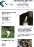 Terapia dla zwierząt - biorezonans