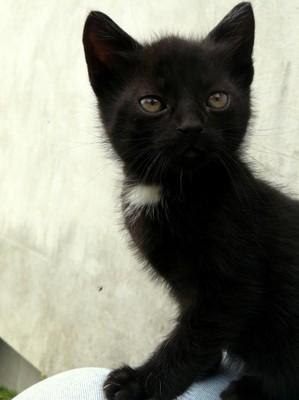 Bardzo dobry kot kotek czarny kocica oddam w dobre ręce LUBLIN - 6649666740 VR26