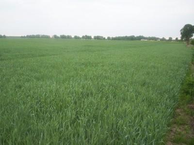 Sprzedam ziemię rolną na mazurach 68 ha