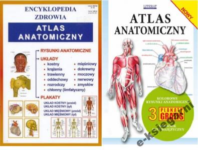 Atlas Anatomiczny 3 Plakaty Mały Atlas Anatomi