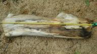 Drewno lipowe, lipa do rzeźbienia, klocek