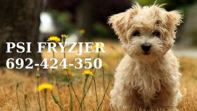 Psi Fryzjer Do Domu Klienta Czeladź Okolice 5715691841 Oficjalne