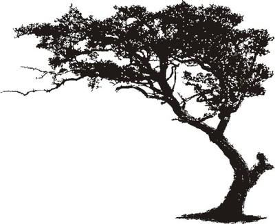 Naklejki ścienne 120x100 Tatuaż Drzewo Motyl Welur 6612203561