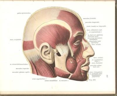 Anatomia Opisowa Sobotta Atlas Anatomiczny 6812418869