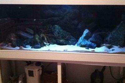 Akwarium 520l Opti White Malawipyszczaki 160cm 6092221021