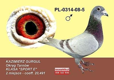 Olimpijczyk Kazimierz Gurgul Wnuki 6169023803 Oficjalne Archiwum Allegro
