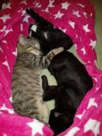 Pilnie śliczne kotki szukają domu