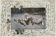 Ptaki kury drób (1906)