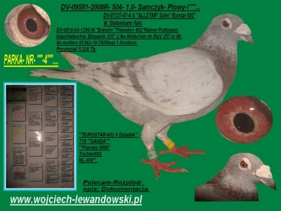 Super Pary Polecam Dokumentacja I Mlode 6195916618 Oficjalne Archiwum Allegro