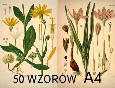Plakaty Vintage Retro Botaniczne 50 Wzorów A4 Hit